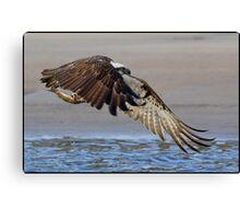 Osprey 360 Canvas Print