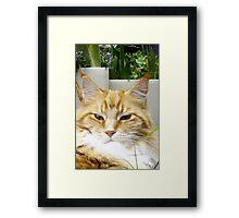 Mr. Inscrutable! Framed Print