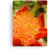 Summer Orange Flower Canvas Print