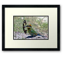 Rainbow Bee-Eater 307  Framed Print