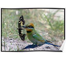 Rainbow Bee-Eater 307  Poster