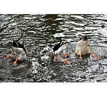 Duck Tails Photographic Print