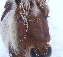 Icy Shetland Pony by Funattic