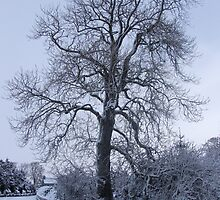 Winter Wonderland tree by Funattic