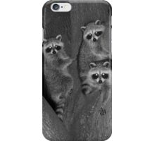 Three Baby Raccoons iPhone Case/Skin