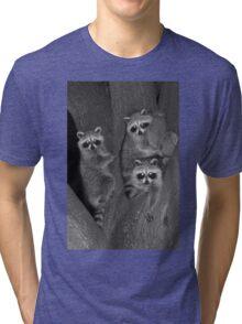 Three Baby Raccoons Tri-blend T-Shirt
