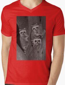 Three Baby Raccoons Mens V-Neck T-Shirt