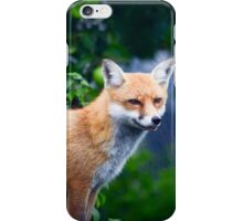 Red Fox in Apple Orchard iPhone Case/Skin