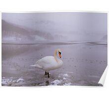 The Lake District: Swan Lake Poster