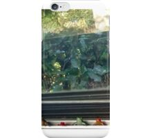 frog sage iPhone Case/Skin