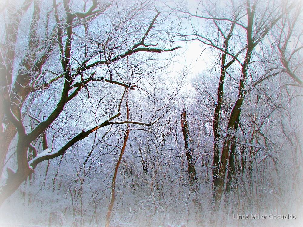 Frost In The Forest by Linda Miller Gesualdo