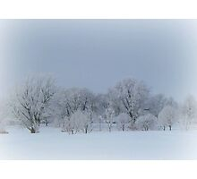 Lots Of Frost Covered Trees Photographic Print