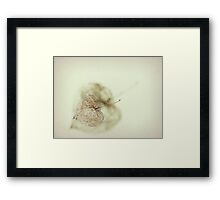 Just a shell..... Framed Print