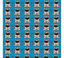 Pug Puppies on Blue Background  Photographic Print