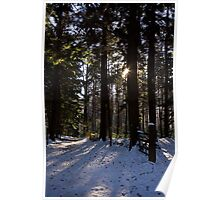 Trees in Snow Poster