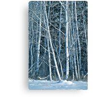 White Birch in the Snow Canvas Print