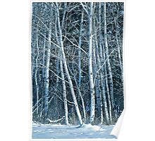 White Birch in the Snow Poster