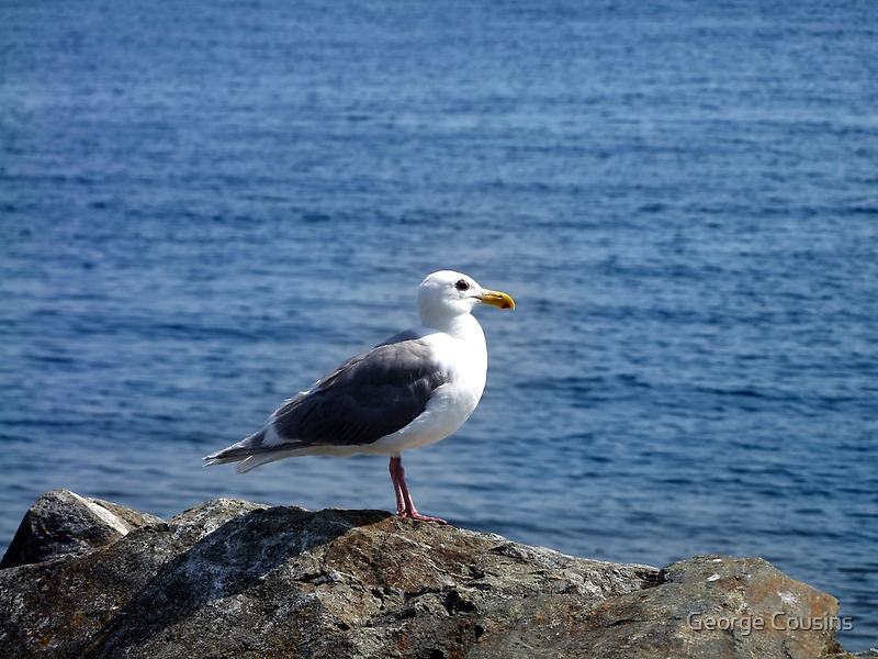 Gull by George Cousins