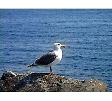 Gull Photographic Print