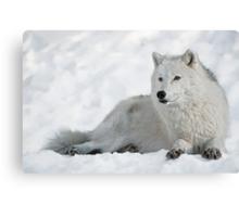 Arctic Wolf Portrait Canvas Print