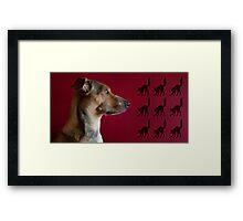 Cat Chaser Framed Print