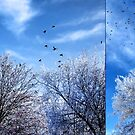 Four and Twenty (diptych) by rocamiadesign