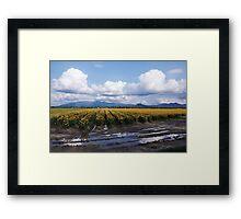 daffodil lane Framed Print