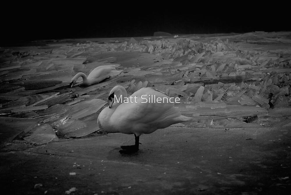 swans on ice by Matt Sillence