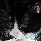 Kitty Cute by saseoche