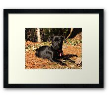 Cinder in the Sun Framed Print