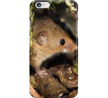 Harvest Mouse 2 iPhone Case/Skin