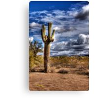 One Tall Cactus Canvas Print