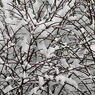 Winter snow patterns by Kiriel