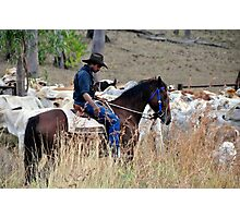 Droving Photographic Print
