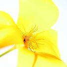 yellow poppy by jade adams