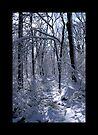 """Waveny Woods 1 by Christine """"Xine"""" Segalas"""