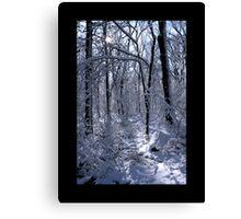 Waveny Woods 1 Canvas Print