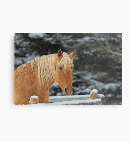 Snowy Equine Metal Print