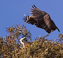 1204102 Great Blue Herons by Marvin Collins