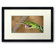 The Green Predator - Vine snake & Garden Lizard, India Framed Print