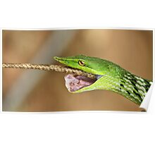 The Green Predator - Vine snake & Garden Lizard, India Poster