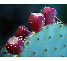 Fruitful Desert Photographic Print