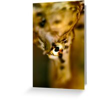 Seahorse Portrait Greeting Card