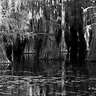 Dark Water - Caddo Lake near Uncertain, Texas by Betty Northcutt