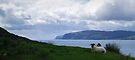 The Firth of Lorn with Sheep by WatscapePhoto