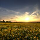 Sunset over a Suffolk rape field by Christopher Cullen