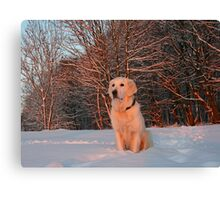 My Golden Retriever Ditte watches the winter sunset Canvas Print
