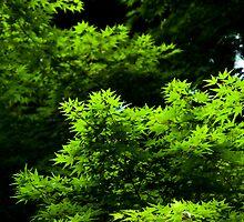 Leaves in the Meiji Jingu Shrine by LauraMargaret