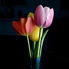 Candy Coloured Tulips (#1) by bgoddard