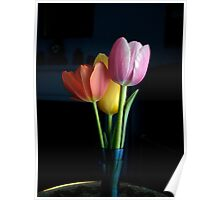 Candy Coloured Tulips (#1) Poster